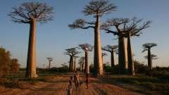 Африка - дикий мир природы. Интересные факты