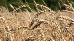 Аграрная революция - это... Аграрные революции в мировой истории