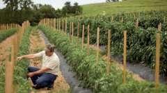 Агротехнический план выращивания овощных культур: особенности, технология и отзывы