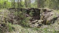 Аллювиальные почвы: характеристика и классификация