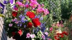 Ампельные растения для сада, террасы, беседки