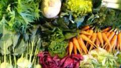 Азбука дачника: когда сажать морковь