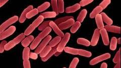 Бактерии гниения и разложения