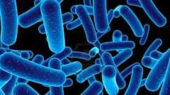 Бактерии являются возбудителями каких болезней? Болезни человека, вызываемые бактериями