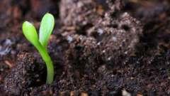 Бактерии почвенные. Среда обитания почвенных бактерий