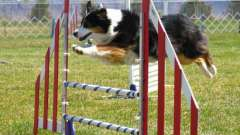 Балабанов иван: школа дрессировки собак