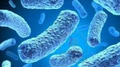Биологическое разнообразие: какие организмы относятся к прокариотам?