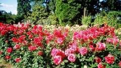 Ботанический сад кривого рога – райский уголок
