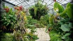 Ботанический сад, волгоград: адреса. Дендрарий в волгограде