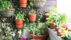 Что можно выращивать на балконе зимой, летом?