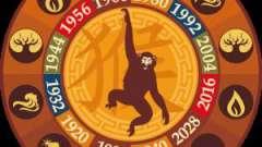 Что отличает людей, рожденных в год обезьяны?
