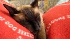 Что означает видеть во сне кошку?