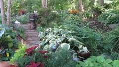 Что посадить в тени на даче - какие овощи, какие цветы?