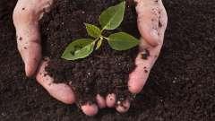 Что растения получают из почвы: краткий обзор