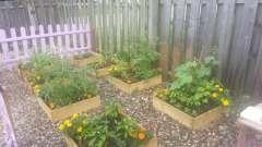 Что с чем сажают? С чем сажать огурцы, помидоры, баклажаны и другие овощи