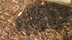 Что такое гумус? Что такое гумус почвы: состав и свойства удобрения