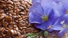 Чудесные семена льна. Полезные свойства и противопоказания
