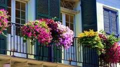 Цветок ампельный - названия и фото. Ампельные цветы для балкона