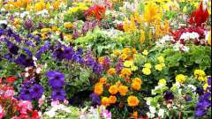 Цветы дачные: какие выбрать начинающему садоводу