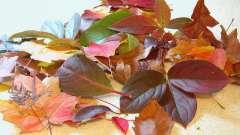 Цветы из листьев деревьев своими руками: мастер-класс с фото пошагово