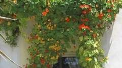 Цветы на балконах: советы профессионалов