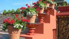 Цветы в горшках – универсальный элемент озеленения