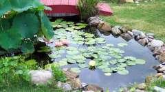 Декоративный пруд на участке