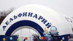 Дельфинарий на вднх - место, где можно познакомиться с дельфинами поближе!