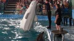 Дельфинарий в челябинске - веселые выходные для всей семьи