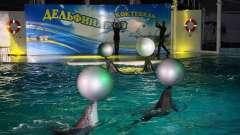 Дельфинарий в коктебеле - интересное место