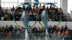 Дельфинарий в набережных челнах - море удовольствия и позитива