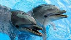 Дельфинарий в сормовском парке нижнего новгорода: описание, адрес, отзывы
