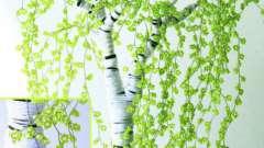 Деревья из бисера: схемы плетения. Сакура, денежное дерево, береза, бонсай из бисера