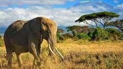 Достопримечательности кении: описание с фото
