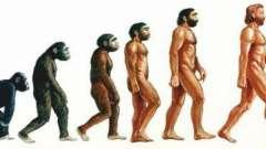 Древние обезьяны, от которых произошел человек