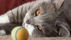 Если у котенка гноятся глаза