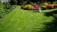 Есть ли газонная трава, которую не надо стричь?