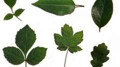Форма листьев растений