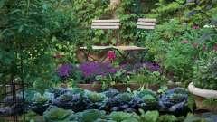 Французские огороды своими руками: схемы, фото