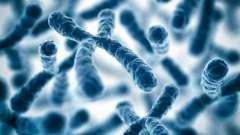 Функции хромосом и их строение. Какую функцию выполняют хромосомы в клетке?