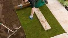Газонная трава: посадка осенью и уход