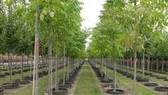Где купить саженцы плодовых деревьев? Питомник (нижний новгород) готов предложить вам множество вариантов.