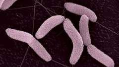 Хемосинтез - это разновидность автотрофного питания