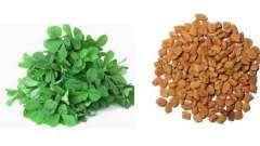 Хильба (трава): применение. Чай хильба. Египетский желтый чай