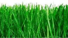 Идеальный газон - как сеять. Советы и рекомендации
