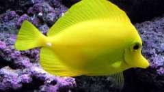 Имена для рыбок - как подобрать?
