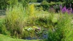 Искусственные водоемы – эффектное украшение вашего сада