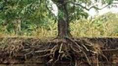 Из чего состоит почва? Узнайте состав почвы