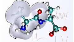 Энергетическая функция белков: примеры и описание. Какие белки и где осуществляют энергетическую функцию?