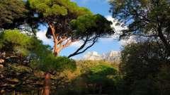 Южный берег крыма - где лучше отдохнуть? Обзор, описание, пляжи и отзывы туристов